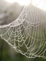 spider-web-150x200 When Shaun Micallef Came to Visit
